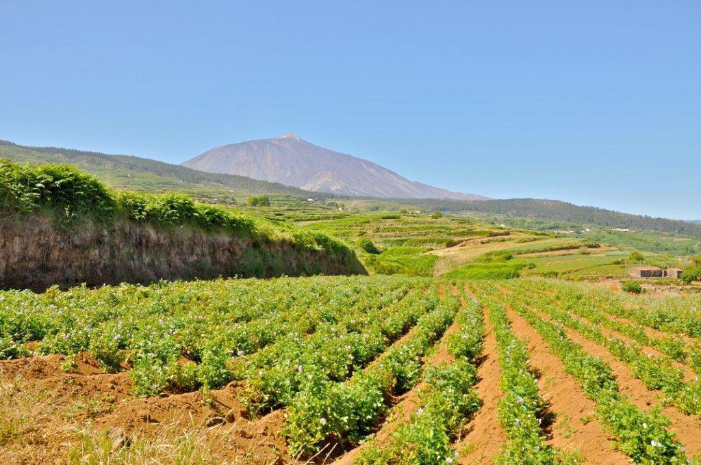 Destinan euros para promover la rotaci n de for Que son cultivos asociados