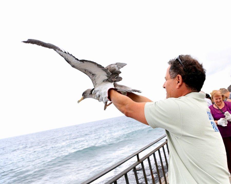 Este año se han realizado más de 30 liberaciones programadas con ciudadanos y colectivos de la isla, con el fin de visibilizar y concienciar a la población sobre hábitos de protección de esta especie