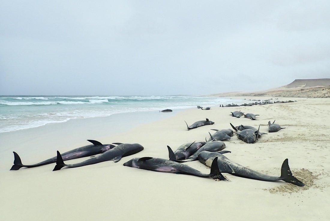Este dramático incidente, ocurrido este miércoles 25 de septiembre, reafirma la necesidad de colaborar en la zona de la Macaronesia para proteger a la enorme diversidad de cetáceos que habita en la región