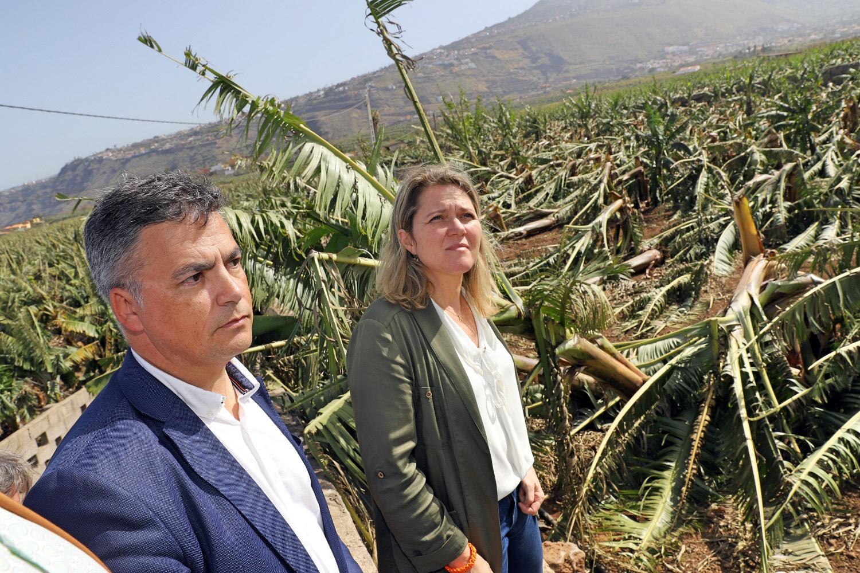 Los consejeros de Agricultura, Pesca y Ganadería del Cabildo y del Gobierno de Canarias han visitado hoy distintas zonas agrícolas afectadas en el Norte de la isla y mañana harán lo propio en el Sur